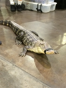 An alligator on the loose at Terror Con.